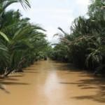 Kanaly Mekonga 1