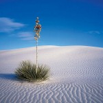 19-Белые пески острова Сокотра. Йемен