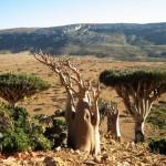 4-Природа острова Сокотра. Йемен