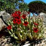 5-Природа острова Сокотра. Йемен