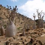 9-Природа острова Сокотра. Йемен