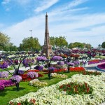 park-tsvetov-al-ain-paradise-v-oae3 (Копировать)