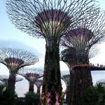 супер деревья