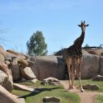 Биопарк.Жители Саванны