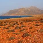 10-Природа острова Сокотра. Йемен