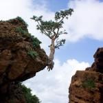 23-Природа острова Сокотра. Йемен