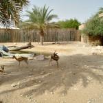 zoopark v Dubae